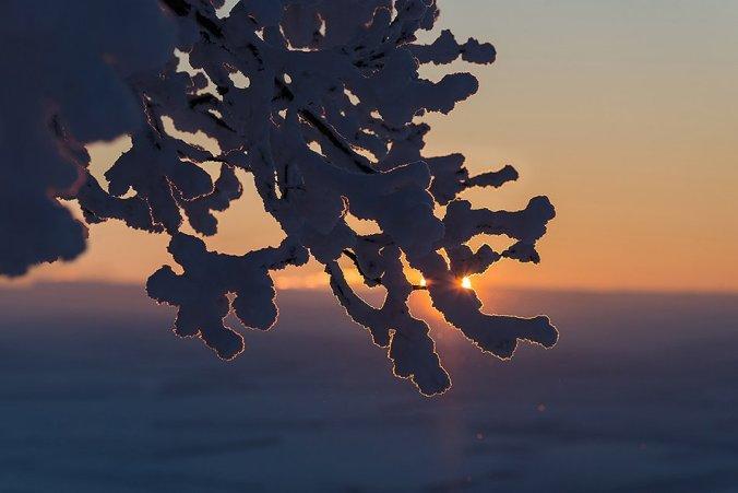 Ветка дерева в снегу