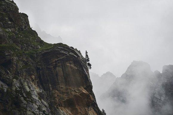 Дерево на скале Цейского ущелья
