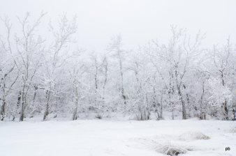 Снежный лес по пути на Бештау