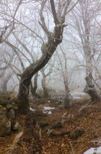 Деревья в инее