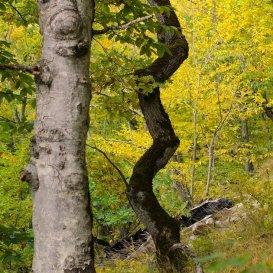 Деревья причудливой формы на Бештау
