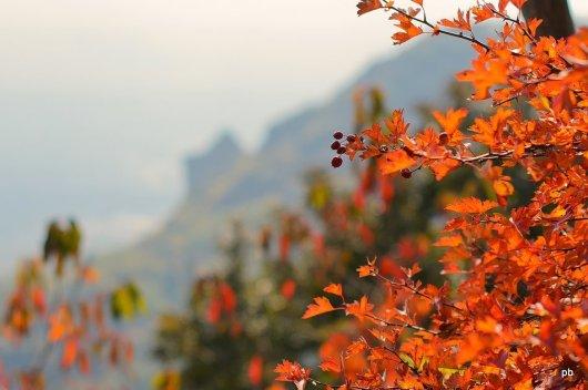 Осенний боярышник