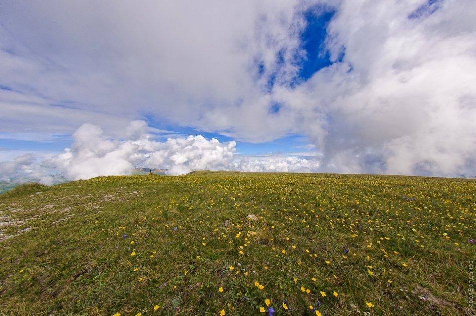 Цветы, горизонт и небо