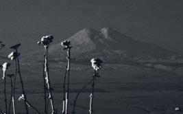Эльбрус черно-белый