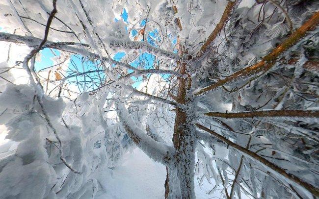 Панорама под деревьями