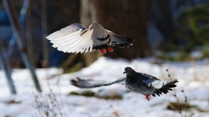 Птичий балет
