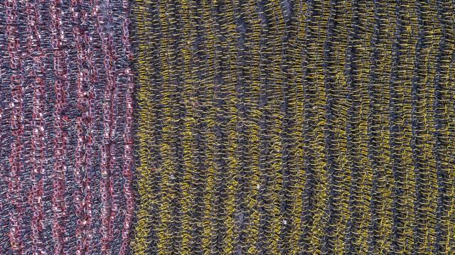 10. Dronski snimak jednog dela panorame sa više desetina hiljada neiskorišćenih bicikala na polju u blizini Šangaja (Yibo Wang/ Shutterstock)