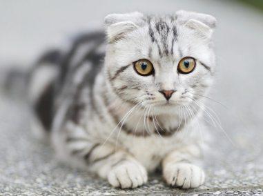 cat sitting Celebration