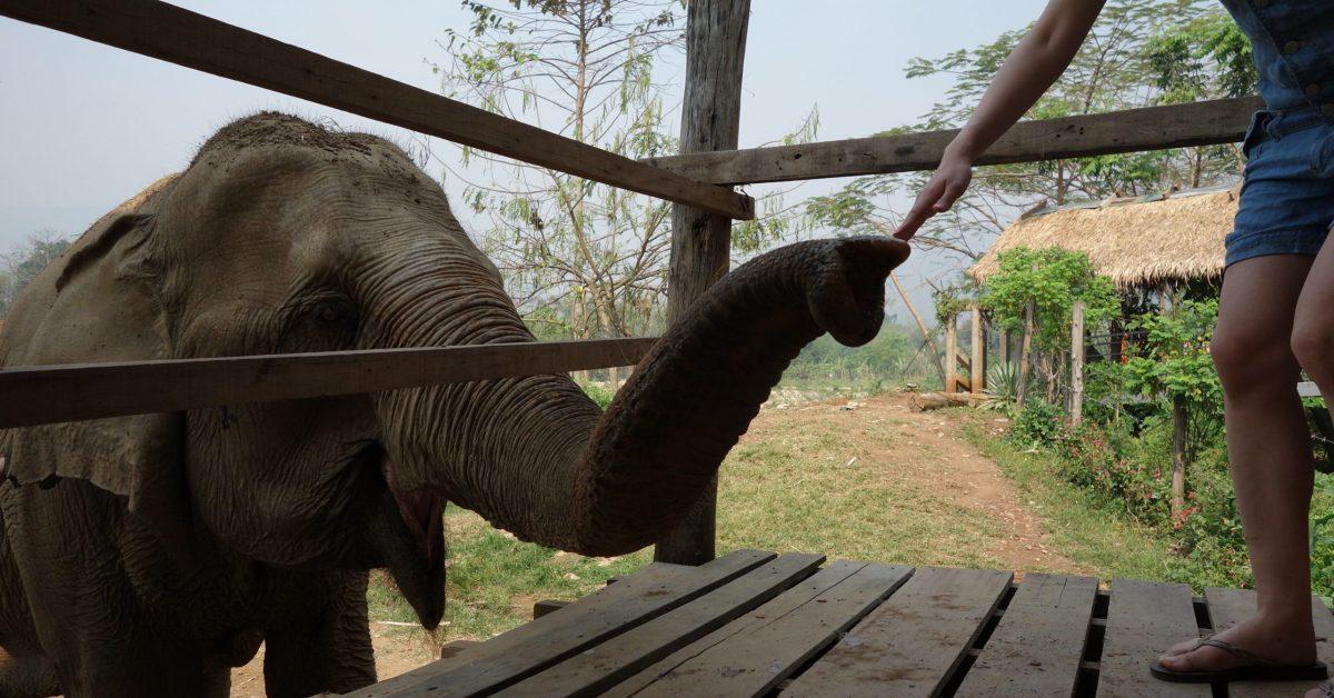 背包客與購物狂的泰國之旅:Elephant Nature Park (三)