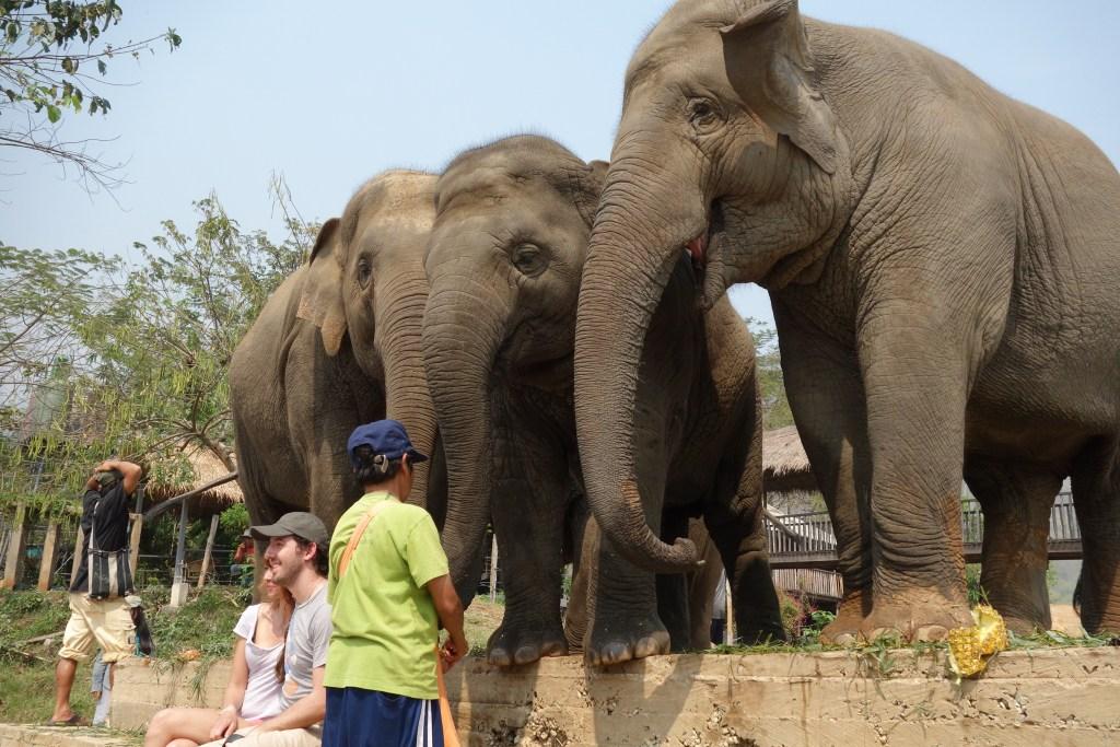 清邁ENP大象在笑