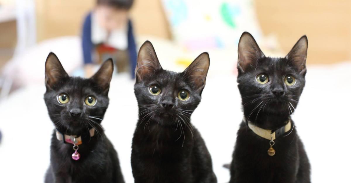 黑貓與黑狗,究竟哪個更難拍 大單眼與小數位各有所長