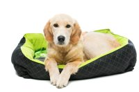 how to wash a dog bed - 28 images - how to wash a dog bed ...