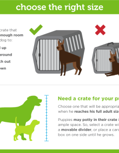 Dog crate size also complete guide to paw castle rh pawcastle