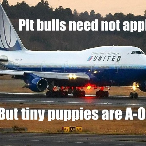 Come Fly the Friendly Skies- as long as you're not a pit bull