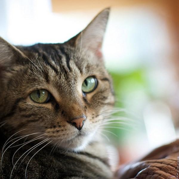 Do we need pet care advocates?