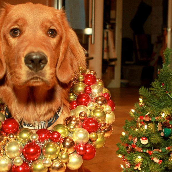 A Veterinarian's Holiday Wish