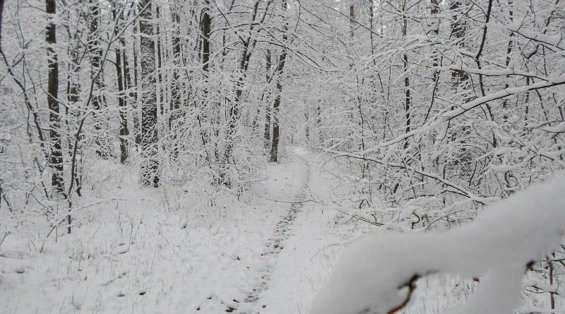 Las Żyrardowski zimą 1