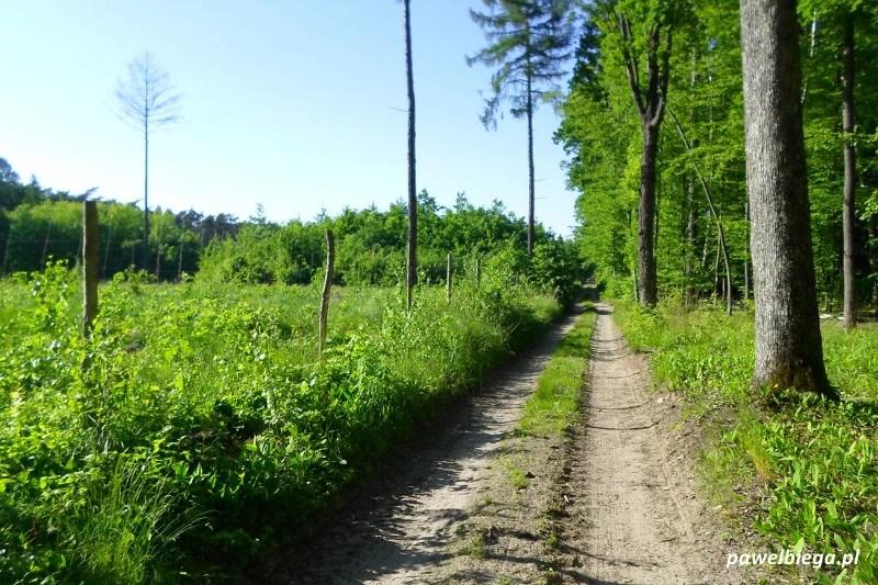 Bieg Chełmońskiego - 4,0 km