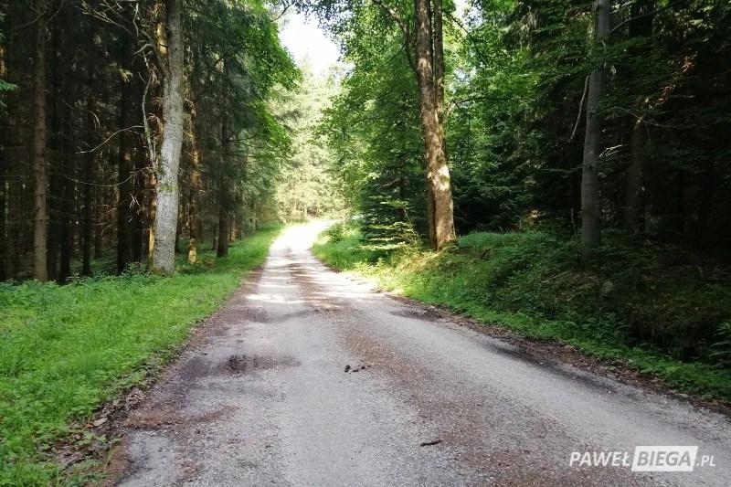 DFBG - droga przez las