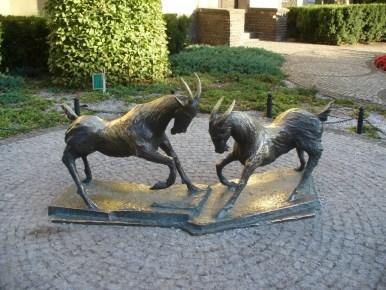 koziołki poznańskie na starym mieście