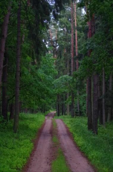 piękny las w okolicy niedźwiedziego rogu nad jeziorem śniardwy na mazurach