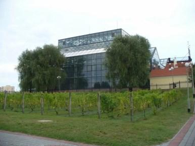 palmiarnia i park winny w zielonej górze, mieście słynącym z wina