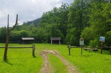 pole namiotowe w puławach dolnych w beskidzie niskim przy drodze prowadzącej do wernejówki i polan surowicznych