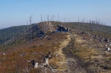 na szlaku z magurki wiślańskiej na magurkę radziechowską w beskidzie śląskim