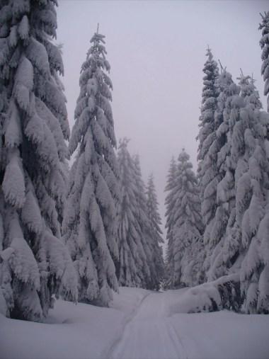 zimowy szlak z trusiówki na jaworzynę kamienicką w gorcach, na drzewach widoczna okiść śniegowa