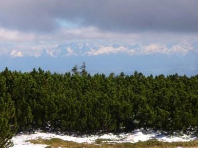 panorama tatr podziwiana spod babiej góry, widoczna kosodrzewina