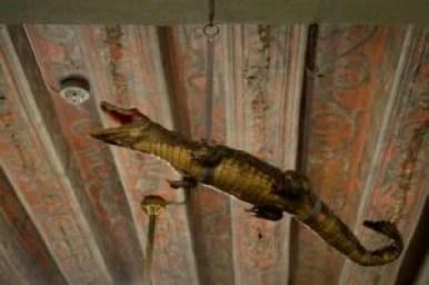 eksponat krokodyla w aptece ratuszowej w tallinie w estonii