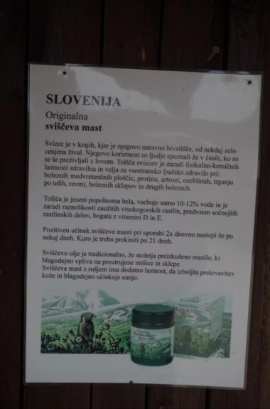 informacja o maści ze świstaka w alpach julijskich w słowenii