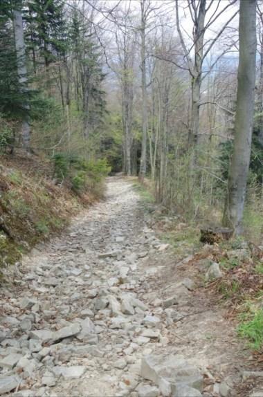 na szlaku z przełęczy zasańskiej na kamiennik w beskidzie makowskim