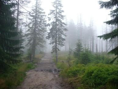 mgła na szlaku ze schroniska na przysłopie na baranią górę w beskidzie śląskim