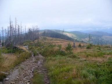szlak z magurki wiślańskiej na magurkę radziechowską w beskidzie śląskim