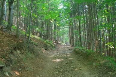 na szlaku z węgierskiej górki na magurkę radziechowską w beskidzie śląskim