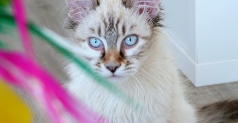 New Year's Resolutions for a Happy and Healthy Cat