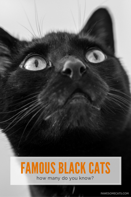 Black cats have a certain mystery and allure about them….perhaps that is why they are often a key character in movies, TV shows, books and cartoons. | Famous Black Cats