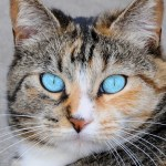10 Fascinating Feline Facts