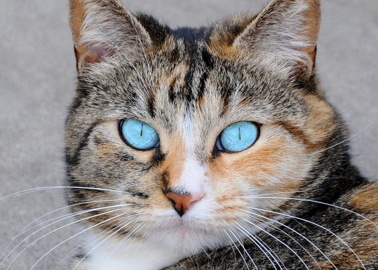Cats aren't colour blind they just don't see colours the same way that we do | 10 Fascinating Feline Facts