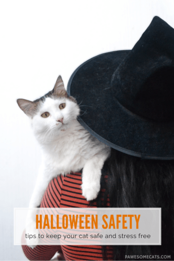 halloween safety - tips to keep your cat safe and stress free