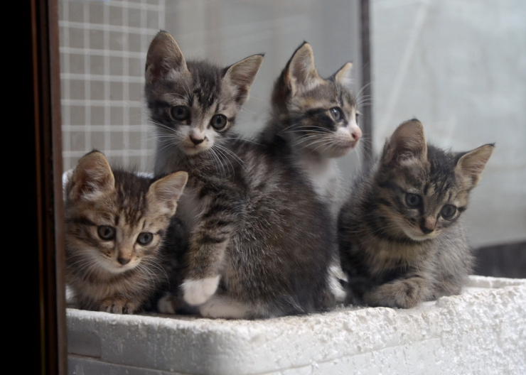 Did you know? A group of kittens is called a kindle from the Old English word 'kindling' which was a term used for birthing | 10 Fascinating Feline Facts