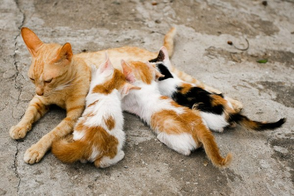 Why do cats purr?   The Healing Power of a Cats Purr