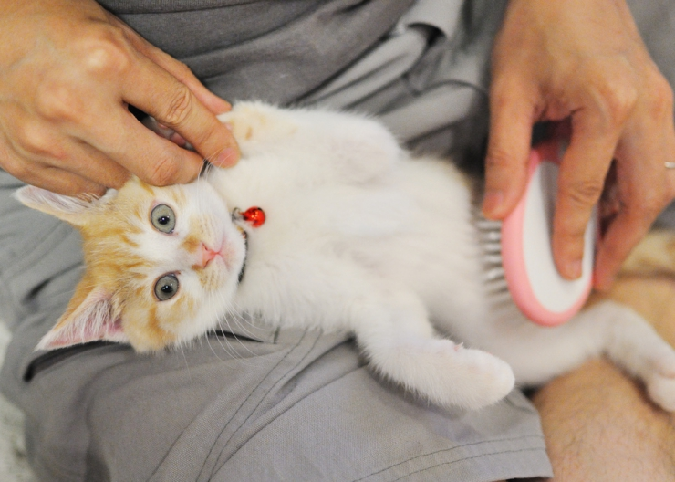 Daily brushing will help prevent hairballs and its a great way to bond with your cat too | Hairballs and What to do About Them