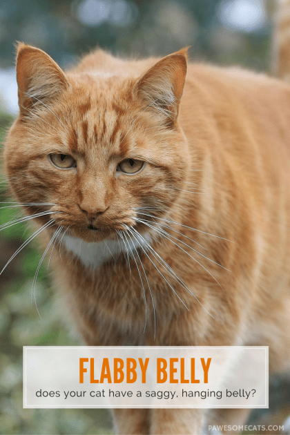 A cat's flabby, saggy belly is known as a primordial pouch - it's a natural part of a cat's anatomy and serves many purposes – especially in the wild | Why Does My Cat Have a Flabby Belly?