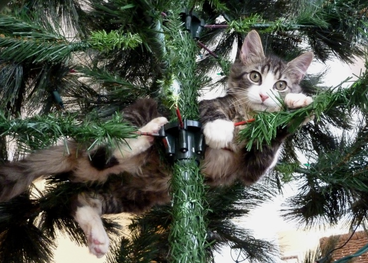When considering a kitten as a Christmas gift, please think carefully to make sure it is a suitable gift for the recipient. A cat is for a lifetime | Should You Give a Kitten as a Christmas Gift?