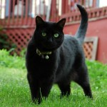 More Interesting Facts About Cats