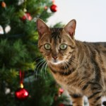 5 Ways You Can Give to Cats in Need This Christmas