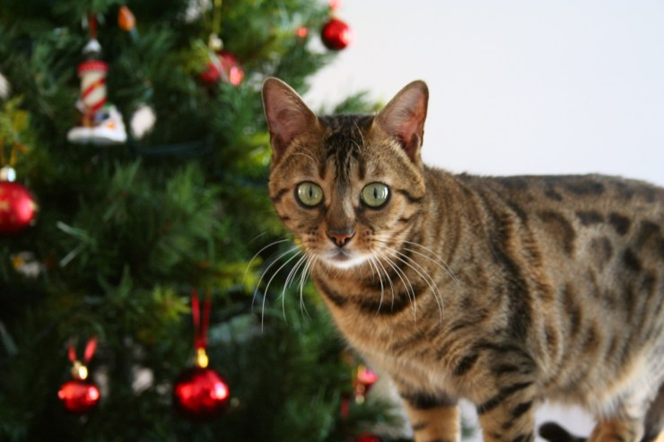 Embrace the true spirit and meaning of Christmas with a gift that makes a real difference for cats | 5 Ways You Can Give to Cats in Need This Christmas