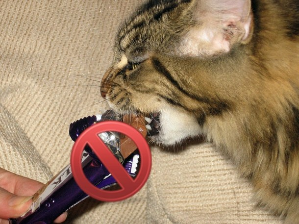 Chocolate is highly toxic to cats | Human Foods Your Cat Shouldn't Eat